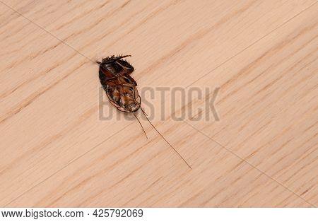 Dead Pest Cockroach Lying On It's Back On Wooden Floor.