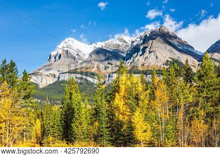 Great Indian summer in the Canadian Rockies. The first snow has already fallen on the peaks. The yellow foliage of birches and aspens is mixed with green conifers. Scenic shores of Abraham Lake