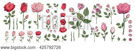 Hand Drawn Rose Bundle. Vector Illustrations Of Flowers And Leaves. Pink And Red Roses Clipart. Rose