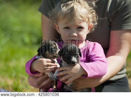 Two Cute Small Brown Puppies Sitting In Hands. Newborn Puppies. Children Love And Care For Their Pet