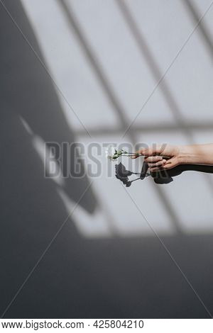Woman holding a white carnation against a white wall