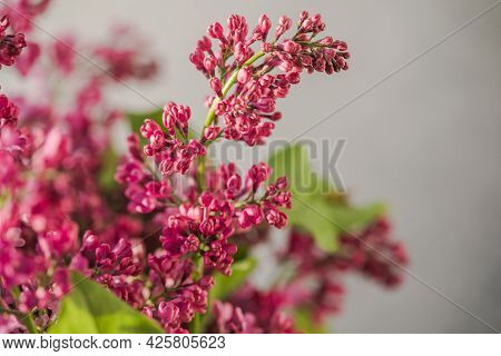 Bouquet Of Colorful Lilac Flowers In A Wicker Basket. Spring Summer Concept. Floral, Interior, Natur