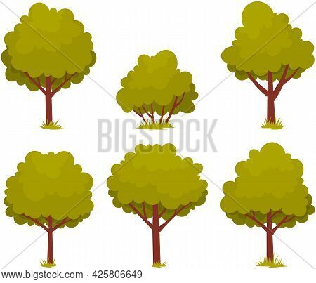 Set Of Deciduous Tree With Trunk And Dense Foliage. High Plant With Widely Spread Branches And Green