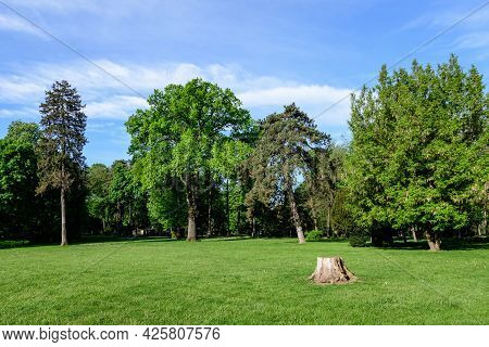 Landscape With Old Green Trees In Mogosoaia Park (parcul Mogosoaia), A Weekend Attraction Close To B