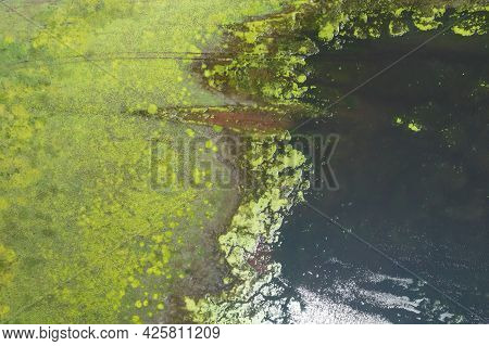 Natural Background Lake Swamp In The Steppe Fragment. Green Beach And Water, Abstract Fragment Natur