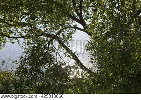 The Water Of A River Or Lake Sparkles And Shines In The Sun. The Lake Can Be Seen Through The Branch