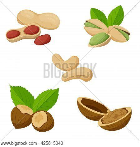 A Set Of Different Nuts. Cashews, Peanuts, Pistachios, Hazelnuts, Walnuts In Shells. Healthy Food, A