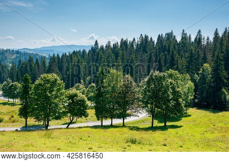 Mountainous Countryside In Summer Landscape. Trees On The Meadow Along The Road. Coniferous Forest O
