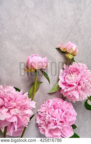 Pink Peonies On Grey Background, Copy Space. Top View. Vertical Orientation