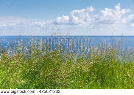 Tall Wild Growing Grass With Ears On A Blurred Background Of Big Reservoir And Sky With Clouds In Su