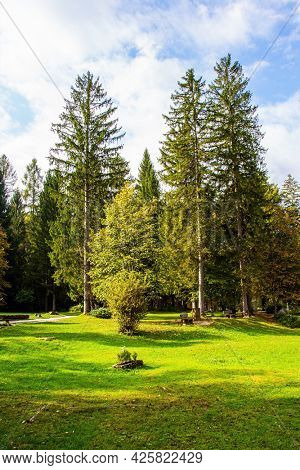 Green grassy lawns at the edge of a picturesque autumn forest. Travel to Slovenia. Picturesque Julian Alps. Beautiful sunny autumn day. Charming pastoral.