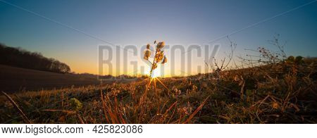 close up grass at sunrise