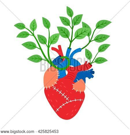 Human Heart With Leaves. Cartoon Biological Organ With Muscle And Veins, Vector Illustration Of Card