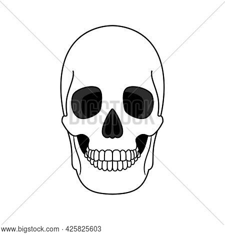 Decoration From Outline Skull. Anatomical Correct Element Of Human Skeleton With Teeth, Ancient Head