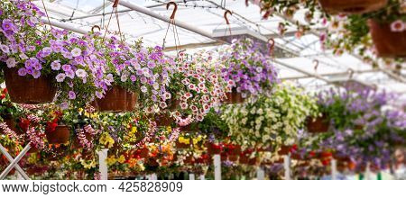 Colorful Flower Pots Hanging In Ornamental Garden Plants Center. Banner Copy Space