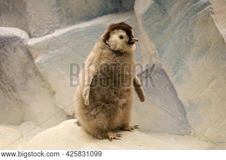 A Stuffed Emperor Penguin Chick, Little Penguin