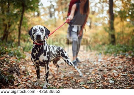 A dog posing for a photo at hiking trail on a beautiful day