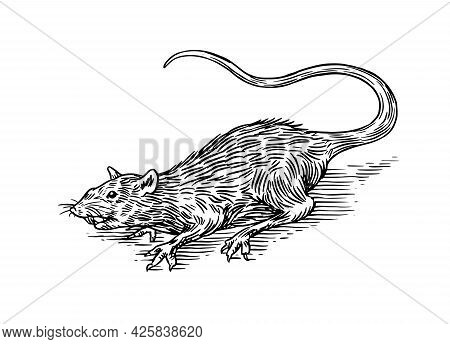 Rat Or Mouse. Wild Animal. Engraved Hand Drawn In Old Sketch, Vintage Style