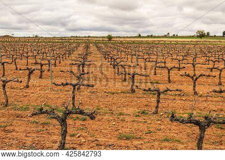 Landscape Of Vineyards With Red Land Under Gray Sky In Castilla La Mancha, Spain