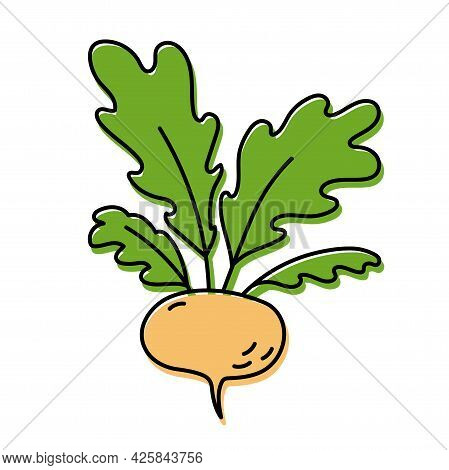 Turnip. Vegetable Sketch. Color Simple Icon. Hand Drawn Vector Doodle Illustration