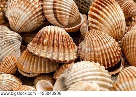 Piled Scallop Sea Shells Summer Marine Background