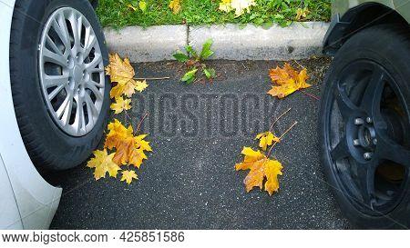 Parked Cars Wheel On Road. Yellow Fallen Maple Leaves On Asphalt. Golden Autumn Street. Travelling.