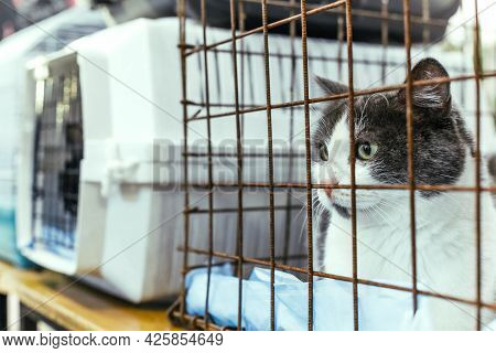 Cat In A Cage To Carry Animals At A Cat Show To Find New Owners. Cat In A Cage