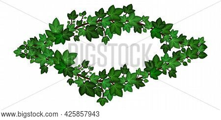 Green Ivy Wreath. Summer Ivy Climbing Leaves Branches, Decorative  Frame Border. Isolated On White B