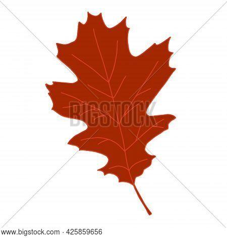 Bright Orange Brown Artistic Oak Tree Leaf Vector Illustration Isolated On White Background. Design