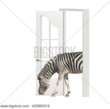 Zebra enters in open door. Opportunities, nature and ecology concepts. Zebra walking through doorway. Isolated on white background. 3d render