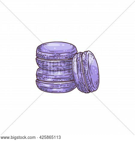 Lavender Aromatized Macaroons Cookies, Hand Drawn Vector Illustration Isolated