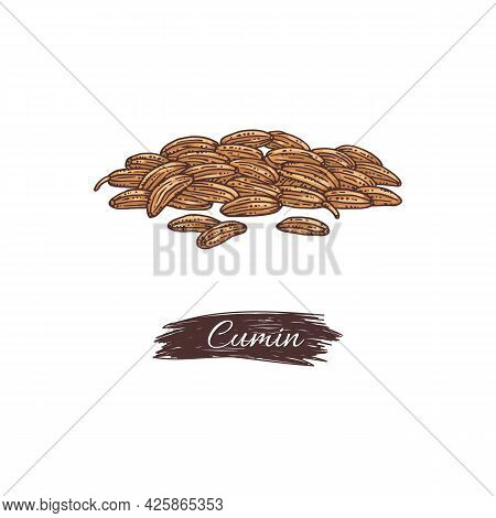 Heap Of Cumin Aromatic Seeds With Tag, Engraving Vector Illustration Isolated.
