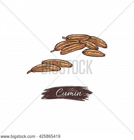 Natural Herbal Dried Cumin Seeds For Cooking Food A Vector Illustration.