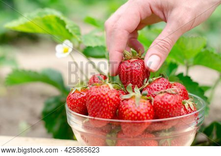 A Female Hand Takes A Strawberry From A Bowl. Eco-friendly Product. Bowl With Strawberries On The Ba