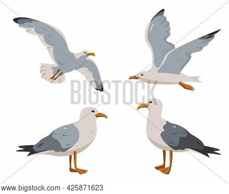 Standing And Flying Seagulls. Gray And White Seagull In Different Poses Isolated On White Background