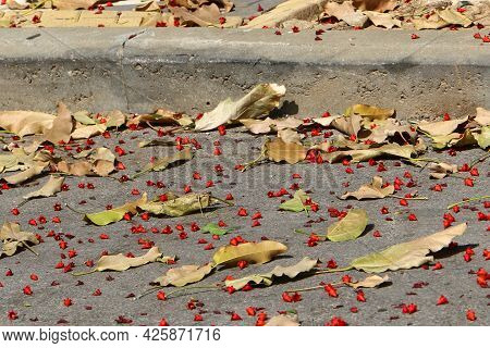 Fallen Dry Leaves And Flowers In The City Park. Hot Summer In Israel.
