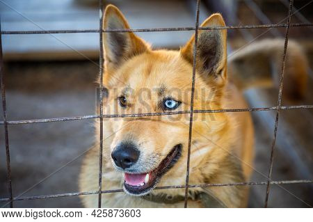 Homeless Dog In Cage At The Animal Shelter, Russia