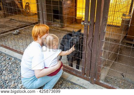 Choosing Of Homeless Dog In Cage At The Animal Shelter, Russia