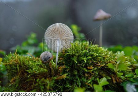 A Small White Snail, Shell Next To Toadstool Mushroom And Green Moss In Forest On Blurred Background