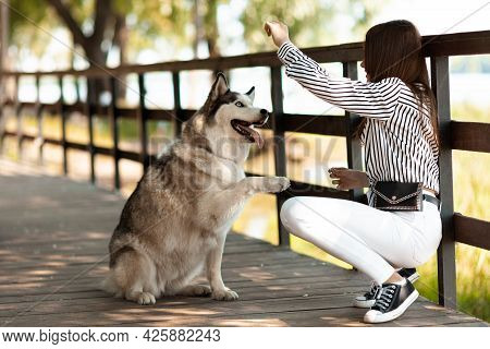 The Girl Trains The Dog To Give A Paw. Obedient Husky, Spending Time With Your Pet.