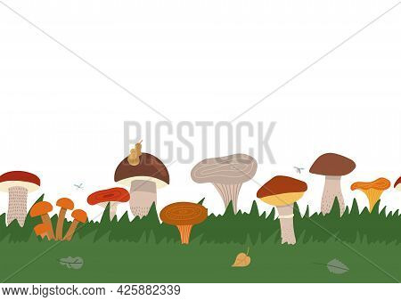 Autumn Texture Seamless Border With Green Grass And Different King Of Mushrooms. Mushroom Mycelium I