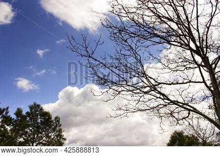 Leafy Forest Under Blue Sky In Castilla La Mancha, Spain