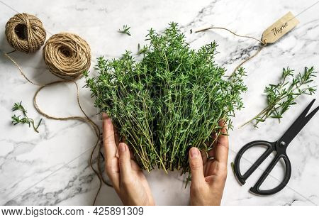 Hands Tie Bouquet Of Fresh Thymes On Light Marble Background With Skein Of Jute Twine. Thyme Herb Bu