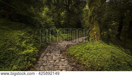 Stone Path Between The Wild Vegetation In Tucumán, Argentina   Stone Path Between The Wild Vegetatio