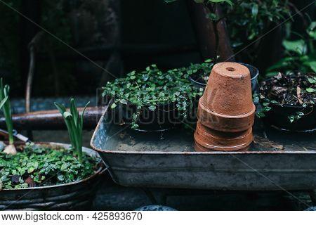 Empty Earthenware Terracotta Flower Pots In Rainy Garden. Authentic Gardening Tools On Wood, Garden