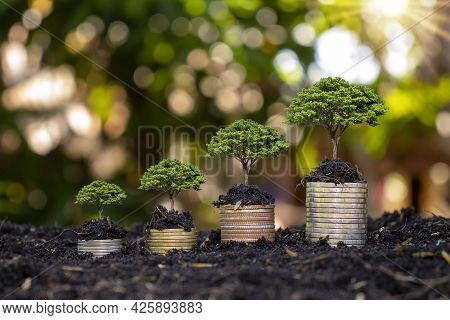 Coins And Trees Are Planted On Piles Of Coins For Finance And Banking. Ideas To Save Money And Incre