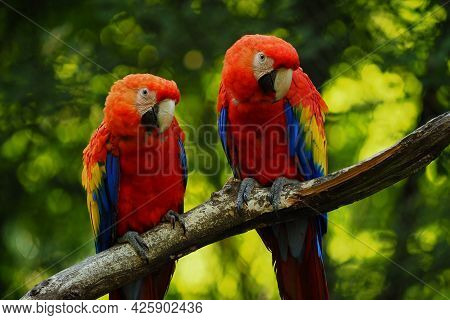 Two Ara Parrots On Brunch With Green Background. Proposal For Adverb. Proposal For Web, Website. Pop