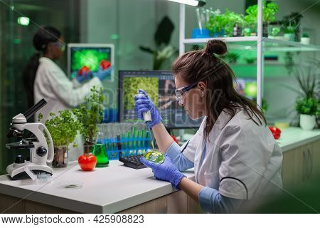 Chemist Woman Taking Dna Liquid From Test Tube With Micropipette Putting In Petri Dish Analyzing Gen