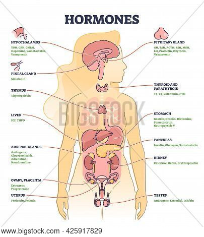 Hormones With Human Body Organs And Labeled Chemical Titles Outline Diagram. Medical Glands Location