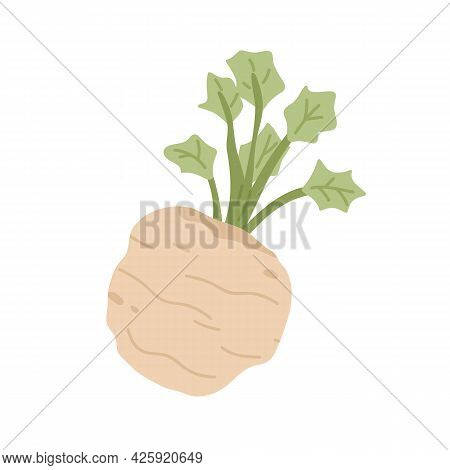 Celery Root With Leaf. Icon Of Celeriac Herb. Raw Fresh Vegetable. Aromatic Food Plant. Colored Flat